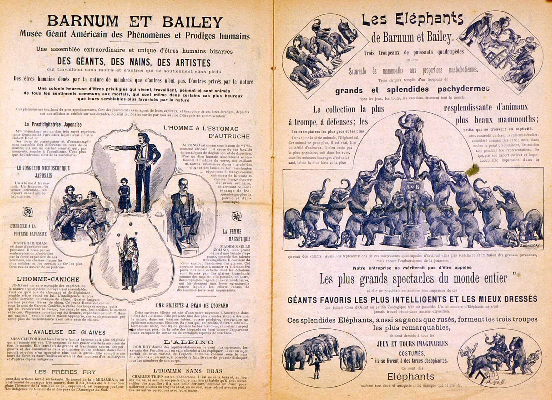 Amiens. Barnum and Bailey